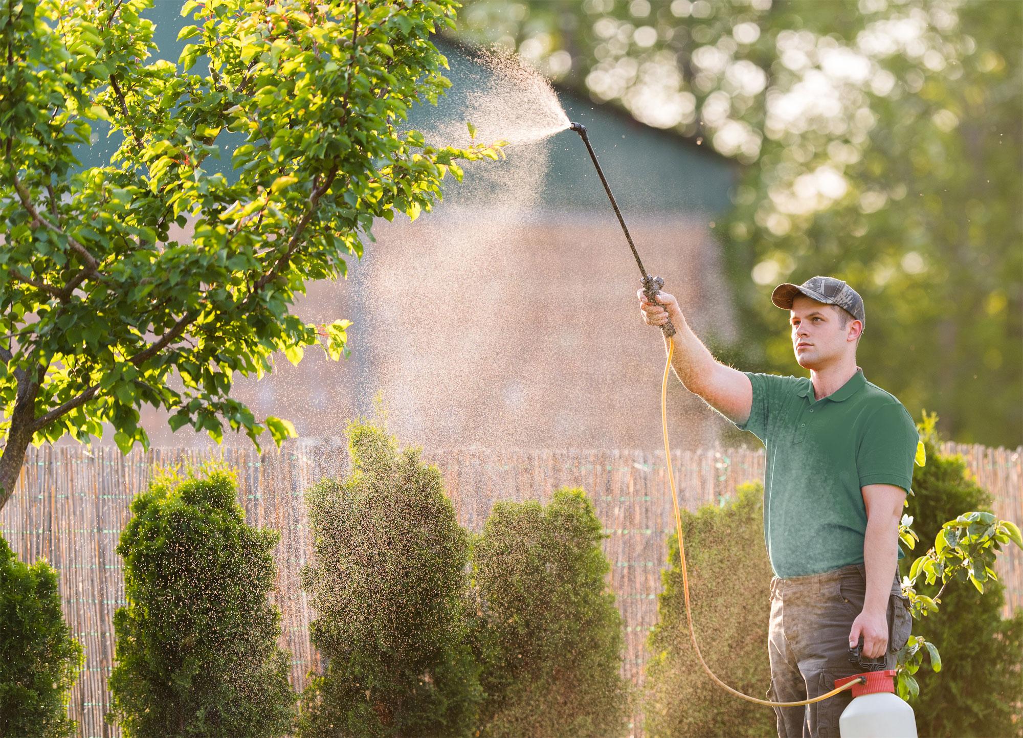 technician spraying tree branch